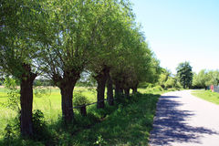 Trees at the road. In the summer Royalty Free Stock Photos