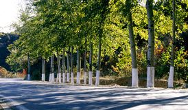 Trees and road Royalty Free Stock Photography