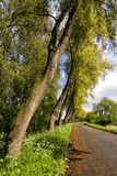 Trees and Road. Trees and a road alongside a road near the Schelde river in Belgium stock image