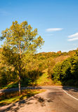 Trees by the road in autumn mountains. Dangerous transportation area Royalty Free Stock Images