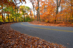 Trees and road in early yellow sunlight, in fall. NJ New Jersey. Royalty Free Stock Photo