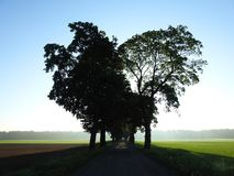 Road and beautiful spring  trees, Lithuania Stock Photo