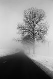 Trees beside a road in fog. Black and white version royalty free stock photography