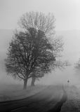 Trees beside a road in fog. Black and white version royalty free stock photos