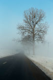 Trees beside a road in fog. In winter royalty free stock photography