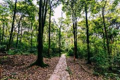 Trees and road in forest Stock Photography
