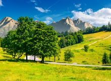 Trees by the road in High Tatra mountains. Composite image of nature scenery in mountainous area. lovely countryside background. wonderful summer weather with Royalty Free Stock Photography