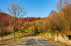 Trees by the road in late autumn at sunrise Royalty Free Stock Photos