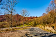 Trees by the road in late autumn at sunrise Royalty Free Stock Images