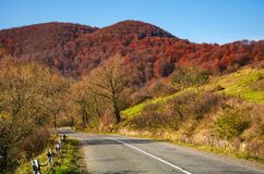 Trees by the road in late autumn at sunrise Stock Photo