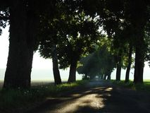 Road and beautiful spring  trees, Lithuania Stock Photos