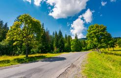 Trees by the road in mountains. Beautiful nature scenery in mountainous area. lovely transportation background. wonderful summer weather with some clouds on a Royalty Free Stock Images
