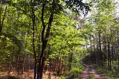 Trees and road in park. Trees covered with green leaves and a road in the spring-season park stock photo