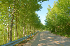 Trees and road Stock Photography