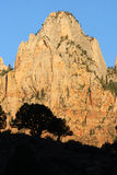 Trees and rock formation. Silhouetted trees with sunlit rock formation in background under blue sky, Zion National Park, Utah, U.S.A Stock Photo