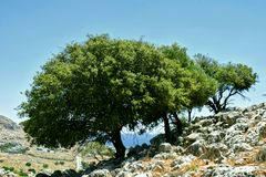 Trees on rock. Green trees on rock. Background of blue sky and sea stock images