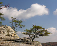 Trees on Rock Ledge. An autumn scene taken in Tennessee of trees on a windswept rock outcrop or ledge called Bee Rock Stock Photography