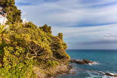 Trees on the rock. With sea on background, Liguria, Italy stock photos