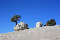 Trees on rock Royalty Free Stock Image