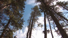 Trees in the Rockies stock video footage
