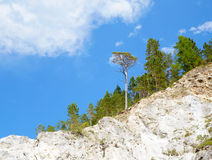 Trees on the rocks Royalty Free Stock Images