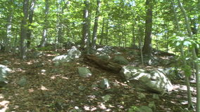 Trees and rocks along Nature Trail (1 of 2). A view or scene of a Nature Center stock video footage