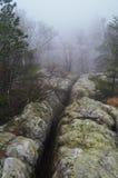 Trees and rocks in Błędne skały, Poland. Stołowe Mountains Park Narodowy in Poland Stock Image