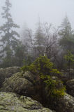 Trees and rocks in Błędne skały, Poland. Stołowe Mountains Park Narodowy in Poland Royalty Free Stock Image