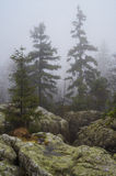 Trees and rocks in Błędne skały, Poland. Stołowe Mountains Park Narodowy in Poland Royalty Free Stock Images