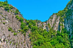 Trees on the rocks in Halong Bay. Trees growing on the rocks in Halong Bay, Vietnam, Southeast Asia royalty free stock photo