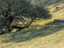 Trees and rocks in hilly meadow Royalty Free Stock Photo