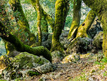 Trees and rocks in hilly meadow Stock Photo
