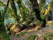 Trees and rocks in hilly meadow Royalty Free Stock Photos