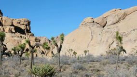 Trees and rocks at Joshua Tree national park in California stock footage