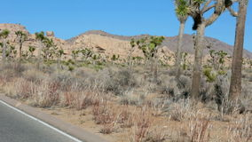 Trees and rocks at Joshua Tree national park in California. Trees and rocks at Joshua Tree  in California stock footage