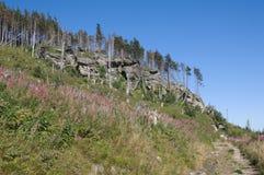 Trees and rocks Stock Photos