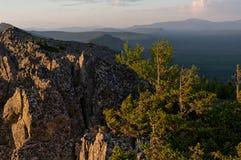 Trees on rocks Stock Image