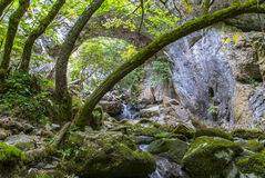 Trees and Rocks. Skewed trees wide angle landscape image Stock Image