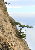 Trees on rocks slope Stock Photography