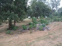 Trees and rocks textured background, nature landscape. royalty free stock photography