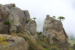 Trees on rocks top Stock Photography