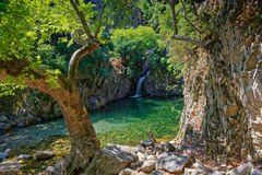 Trees on rocky banks Royalty Free Stock Image