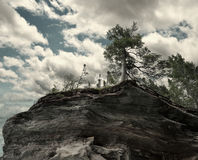 Trees On A Rocky Cliff Stock Photo