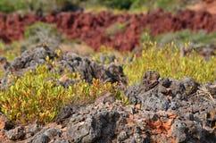 Trees on rocky hillside Stock Images