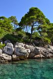 Trees on rocky sea shore. Green trees on rocky sea shore with clear blue sky behind and turquoise waters below. Picture taken near Dubrovnik, Croatia by Adriatic Stock Photos