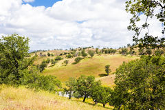 Trees on Rolling Hills Stock Image