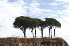Trees In Rome, Italy. Trees On A Hill In Rome, Italy, Cloudy Sky stock image