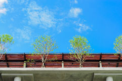 Trees on roof deck Royalty Free Stock Images