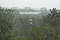 Trees and rooftops under   rain. Stock Photos