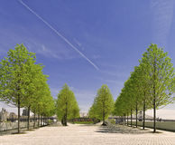 Trees, Roosevelt Island Park, New York City royalty free stock images